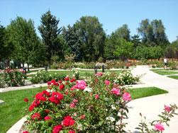 Roosevelt rose garden