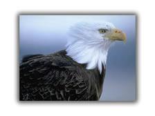 supply_eagle