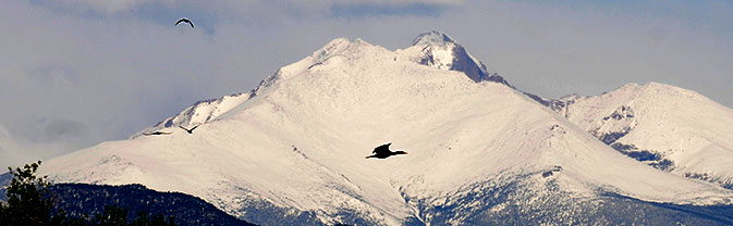 Bird over Longs Peak and Mount Meeker