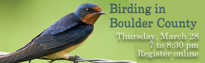 Come learn about the birds of Boulder County!