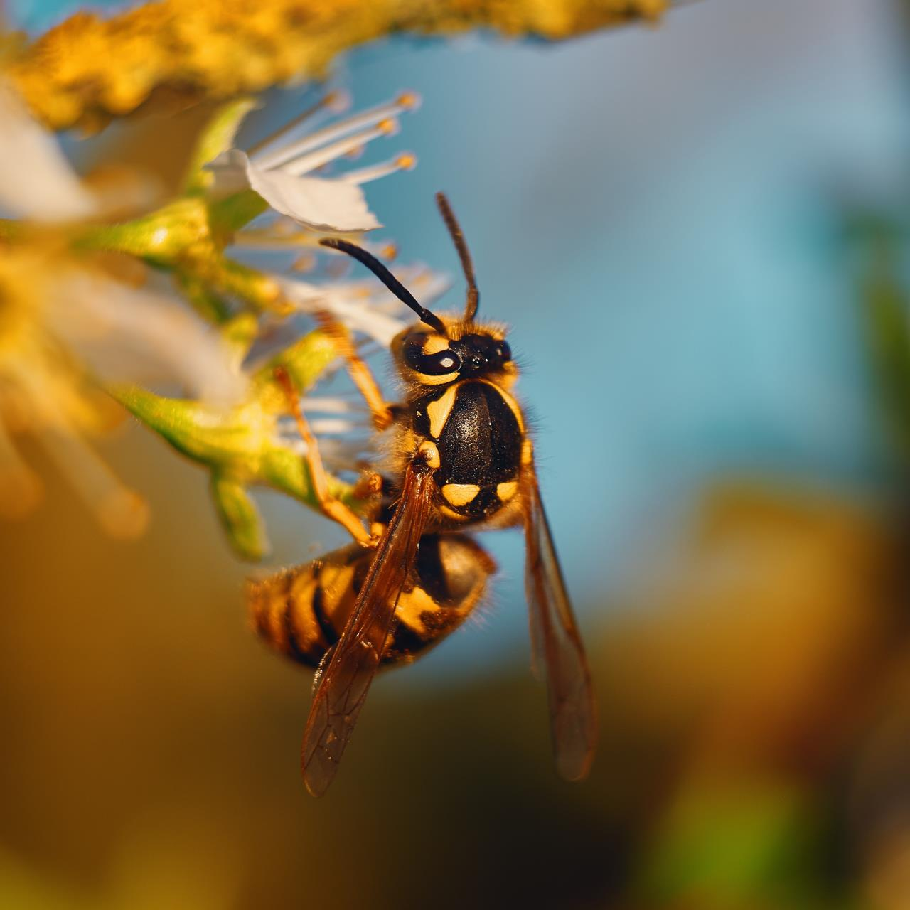 Wasp Safety Blog Picture