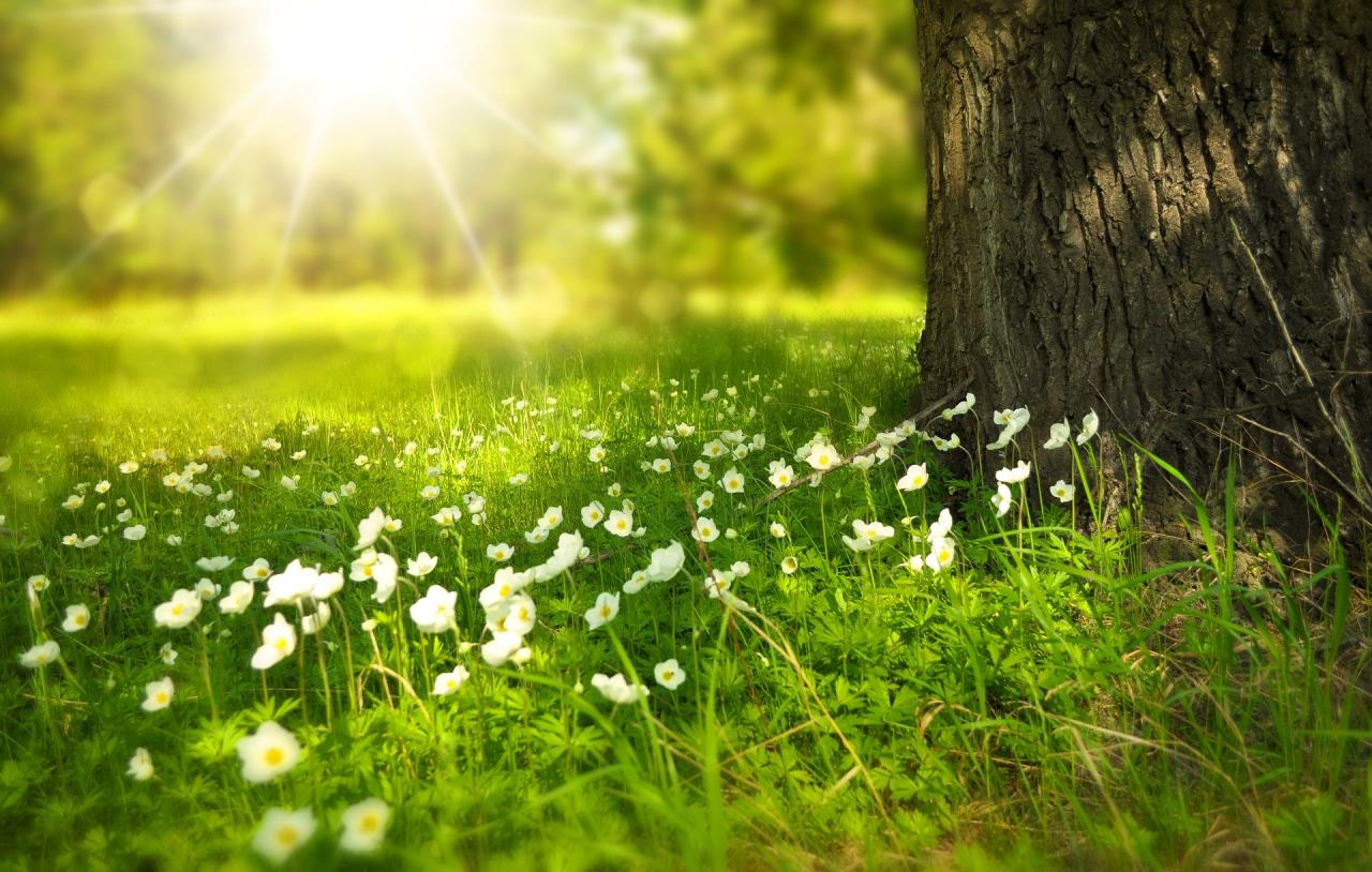 Bright Sunlight on Trees, Grass and Flowers