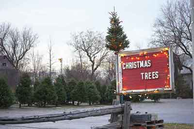 christmas-tree-lot-crop