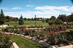 memorial-rose-garden
